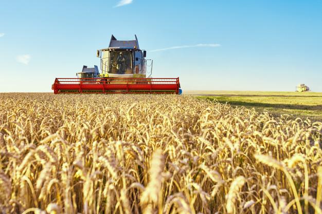 Россия готовится к рекордному сбору зерна