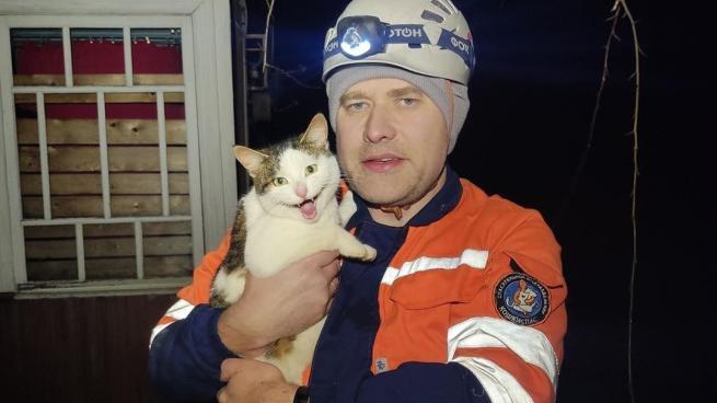 В Гатчине сняли домашнюю кошку с тополя