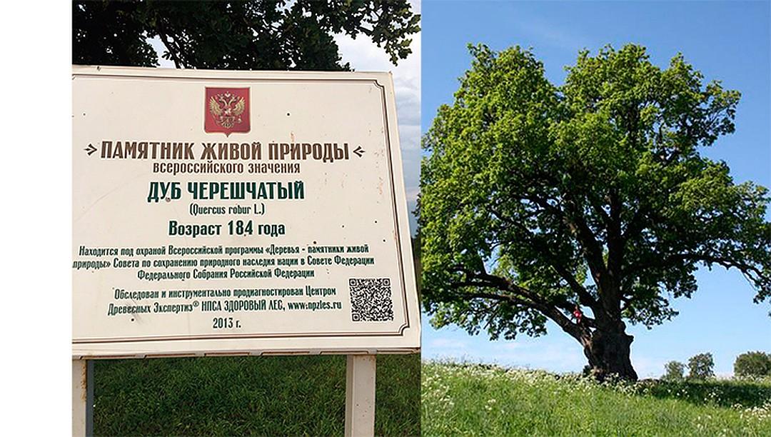 дерево года России