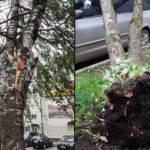 10 деревьев повалил шквалистый ветер в Гатчине